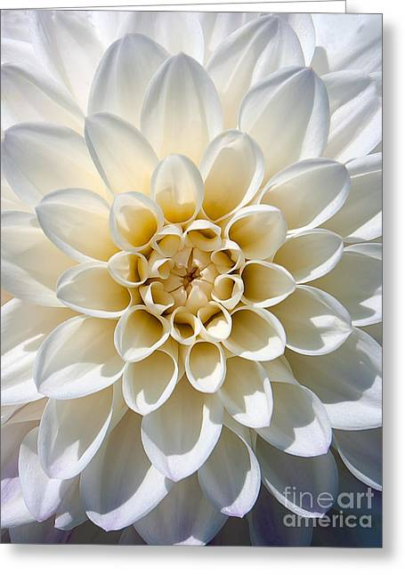 Greeting Card featuring the photograph White Dahlia by Carsten Reisinger