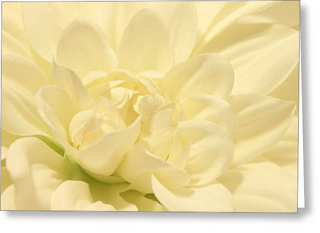 White Dahlia Dreams Greeting Card