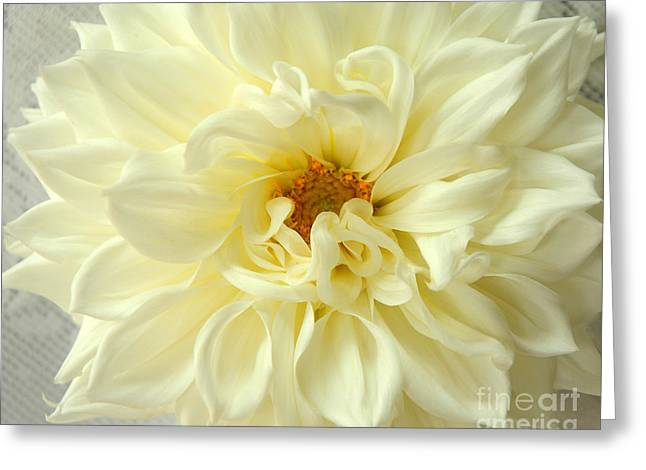 White Dahlia Greeting Card