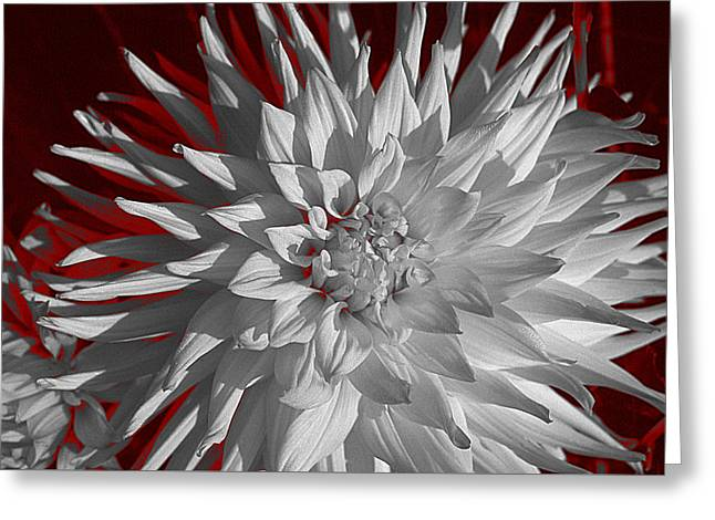 Greeting Card featuring the digital art White Dahlia by Richard Farrington