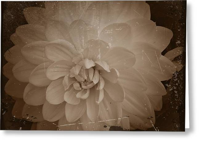 White Dahlia Sepia 2 Greeting Card by Chalet Roome-Rigdon