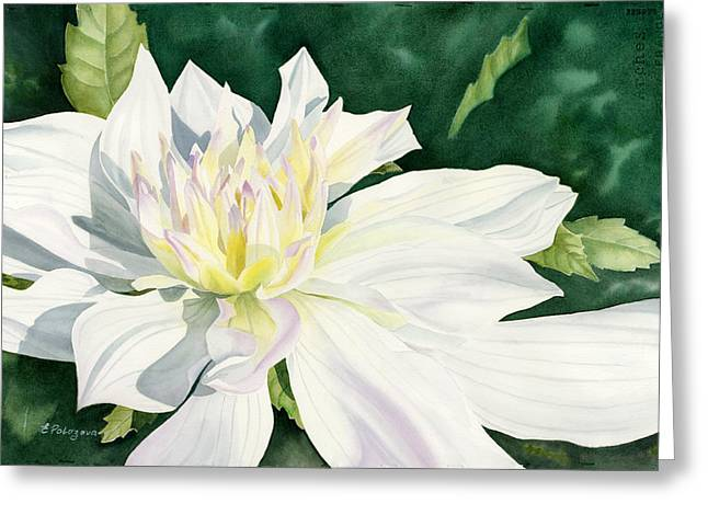 White Dahlia - Transparent Watercolor Greeting Card