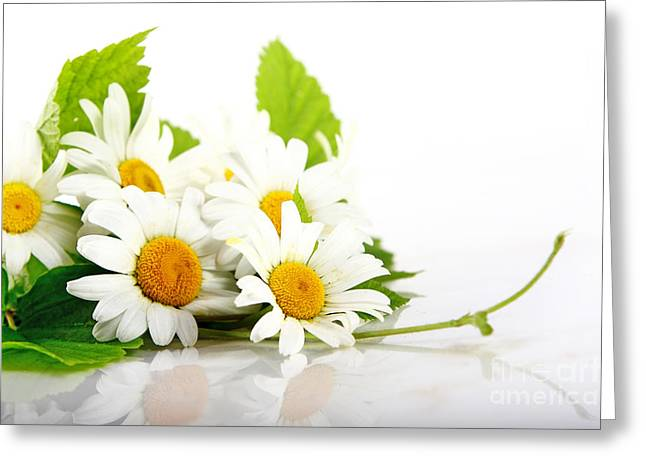 White Daisy Flowers Greeting Card by Boon Mee
