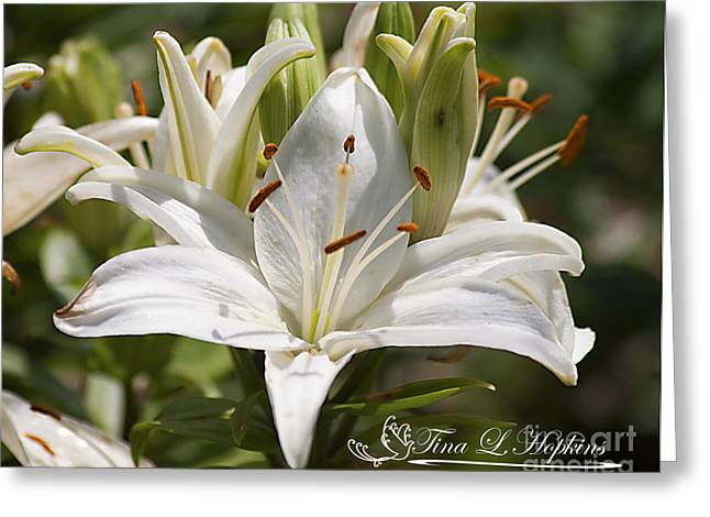 White Day Lily 20120615_36a Greeting Card by Tina Hopkins