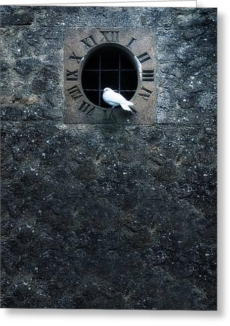 White Dove Greeting Card by Joana Kruse