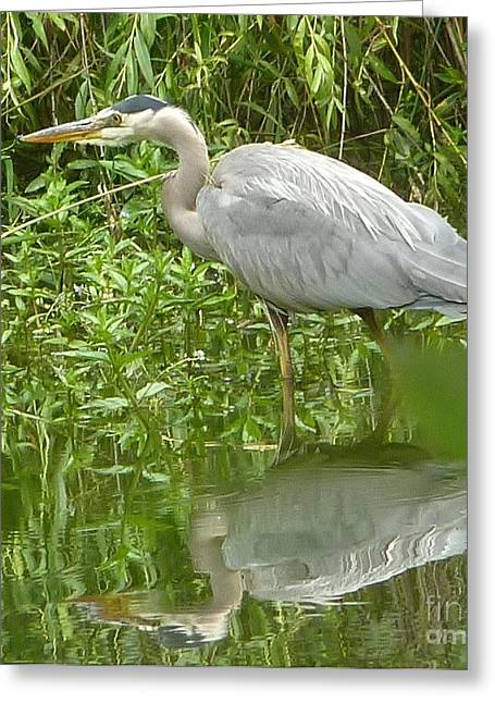 Greeting Card featuring the photograph White Egret Double  by Susan Garren