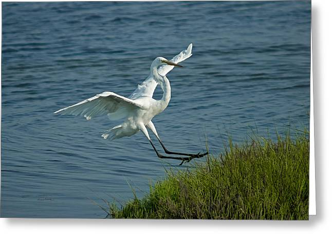 White Egret Landing 2 Greeting Card by Ernie Echols