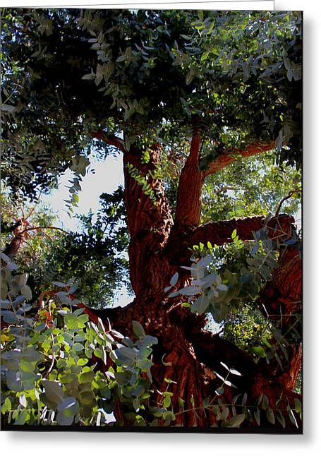 Greeting Card featuring the photograph White Eucalyptus 2 by Jennifer Muller