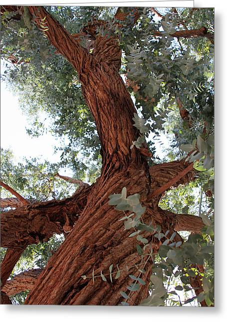 Greeting Card featuring the painting White Eucalyptus Tree by Jennifer Muller