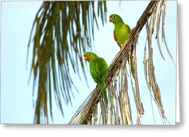 White-eyed Parakeets, Brazil Greeting Card by Gregory G. Dimijian, M.D.