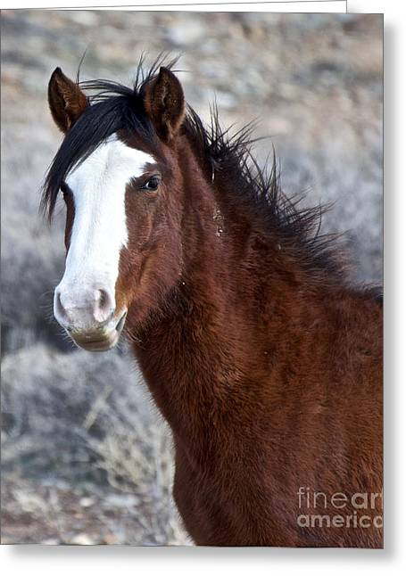 White-faced Mustang In December V Greeting Card