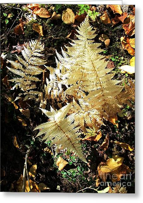 White Ferns Greeting Card by Linda Marcille