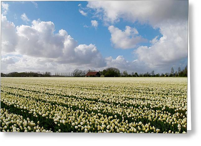 White Field Greeting Card