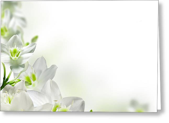 White Flower Frames Greeting Card by Boon Mee