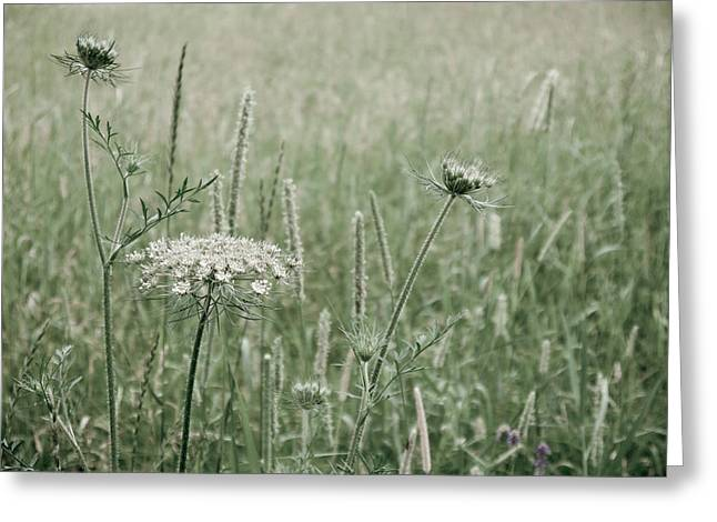 Greeting Card featuring the photograph White Flower In A Meadow by Rob Huntley