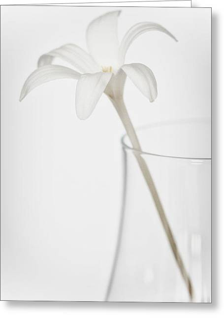 Greeting Card featuring the photograph White Flower In A Vase by Zoe Ferrie