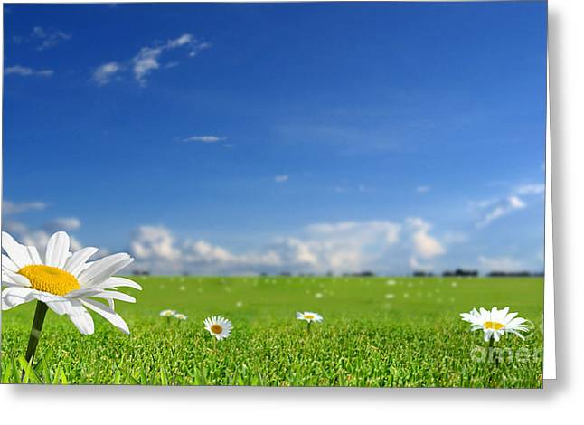 White Flower Landscape Greeting Card by Boon Mee