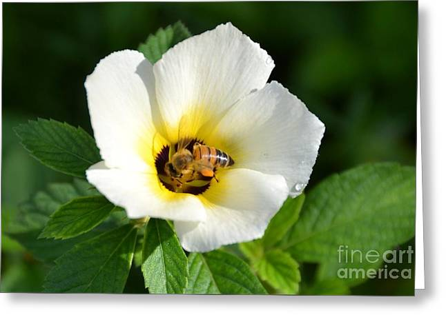 Greeting Card featuring the photograph White Flower- Nectar by Darla Wood