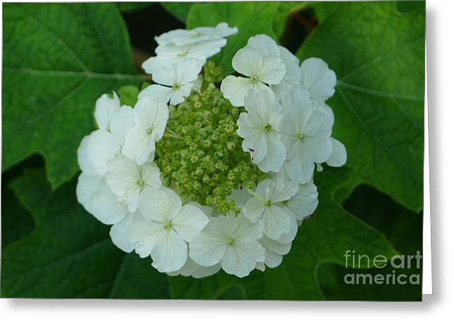 Greeting Card featuring the photograph White Flower by Nora Boghossian