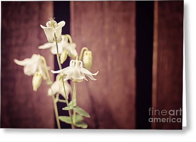 White Flowers Against Dark Wooden Fence Greeting Card by Natalie Kinnear