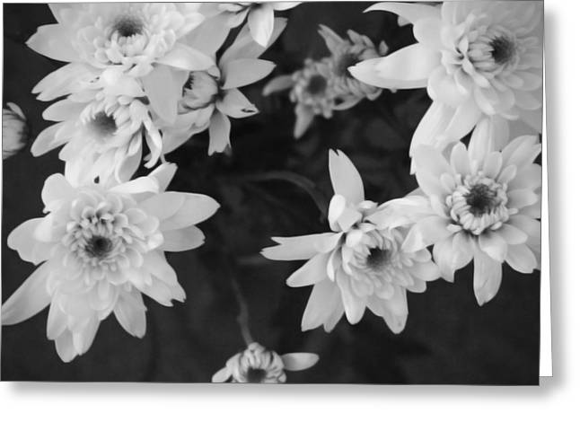 White Flowers- Black And White Photography Greeting Card by Linda Woods