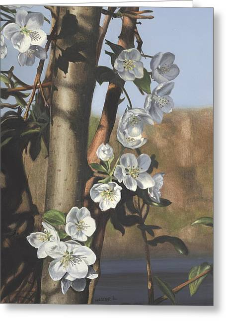 White Flowers Greeting Card by Michele Renee