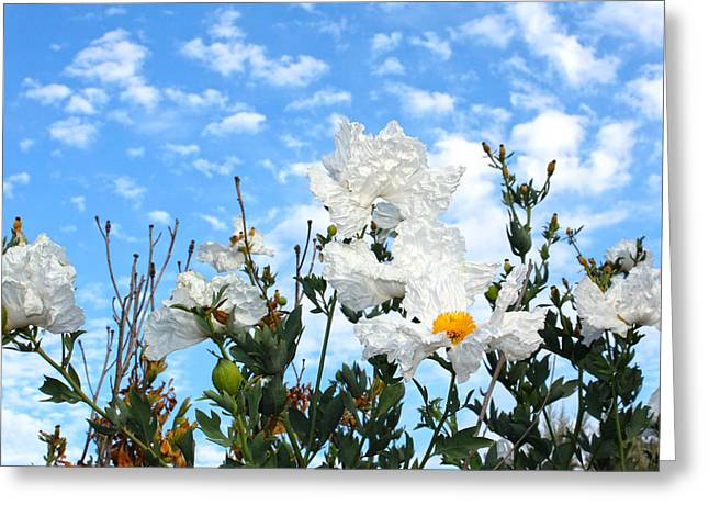 White Flowers - Mike Hope Greeting Card
