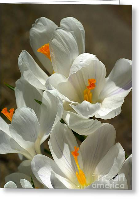 White Flowers Greeting Card by Nur Roy