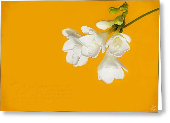 White Flowers On Tangerine Study Greeting Card by Lisa Knechtel