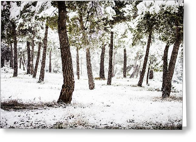 White Forest Greeting Card by Marc Garrido
