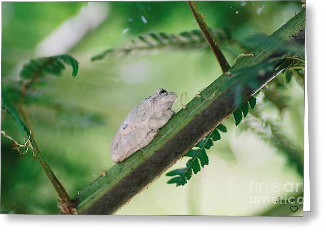 Greeting Card featuring the photograph White Frog by Donna Brown