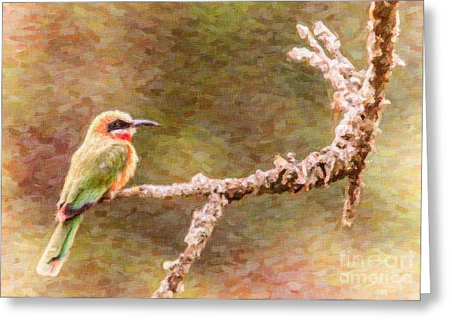 White-fronted Bee-eater Greeting Card by Liz Leyden
