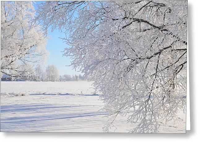 White Frost Greeting Card by Conny Sjostrom