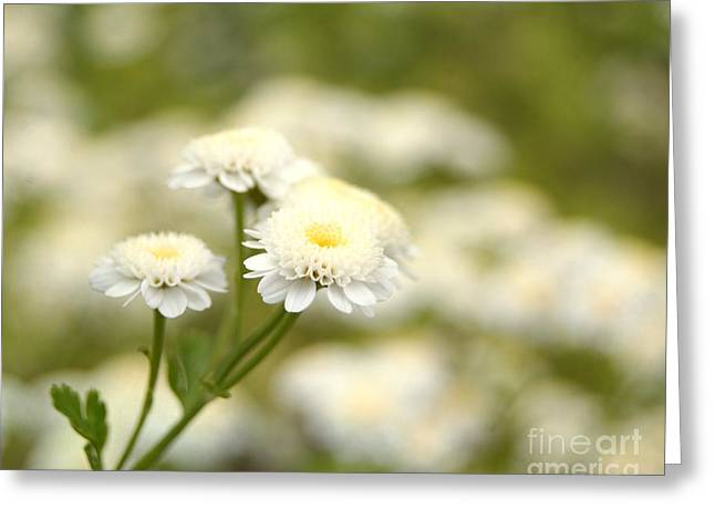 White Garden II Greeting Card