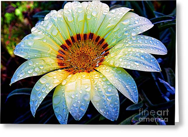 Greeting Card featuring the photograph White Gazania by Elvira Ladocki