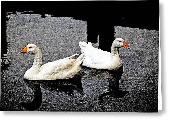 Greeting Card featuring the photograph White Geese by Randy Sylvia