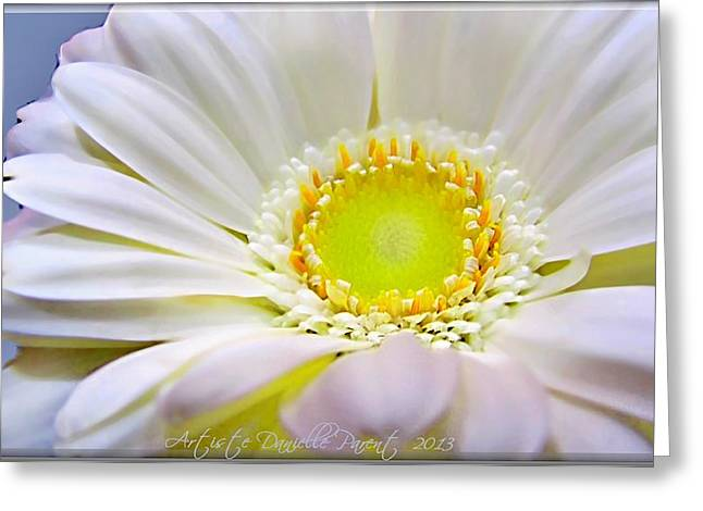 White Gerber Daisy Macro Greeting Card by Danielle  Parent