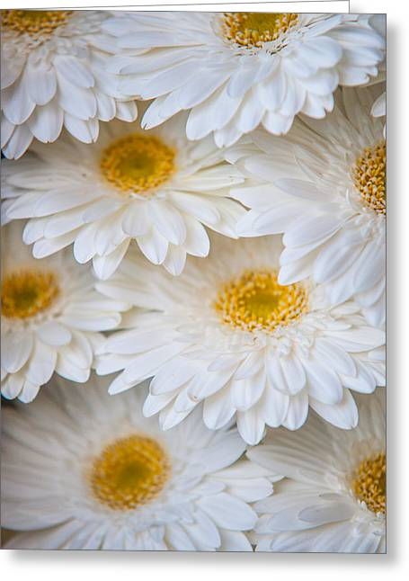White Gerbera. Amsterdam Flower Market Greeting Card by Jenny Rainbow