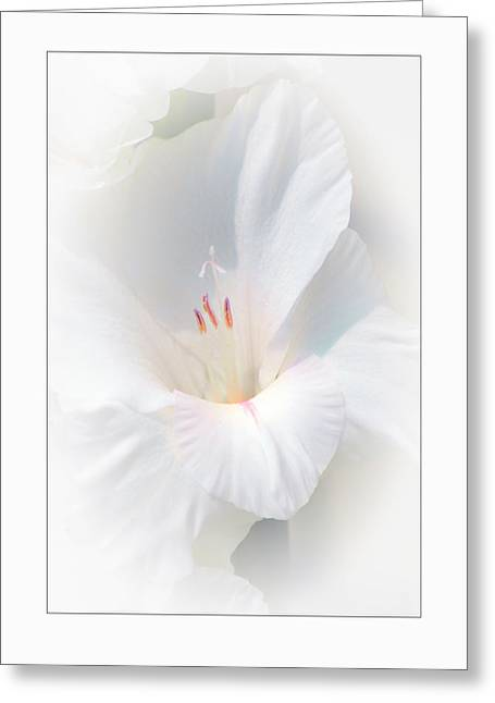 Greeting Card featuring the photograph White Glad by David Armstrong