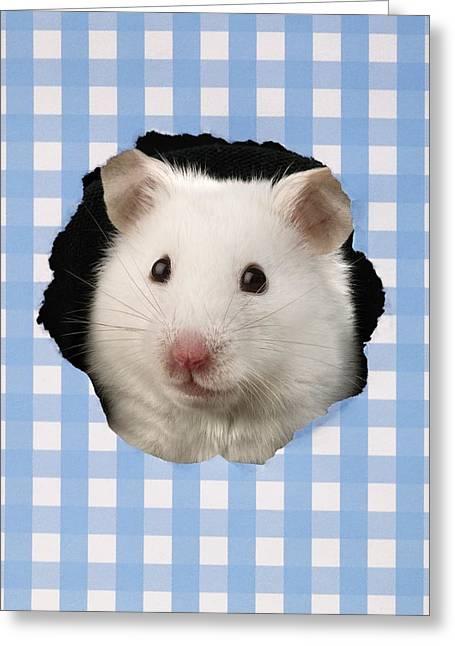 White Hamster Greeting Card by Greg Cuddiford