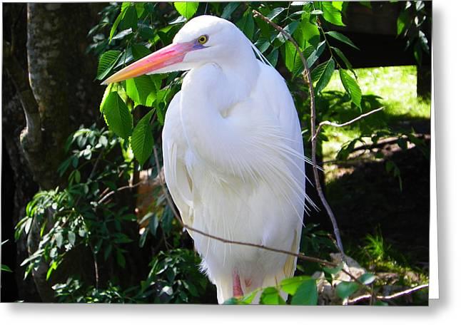 White Heron Beauty Greeting Card by Judy Wanamaker