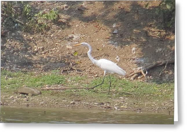 White Heron Greeting Card by Eric Switzer