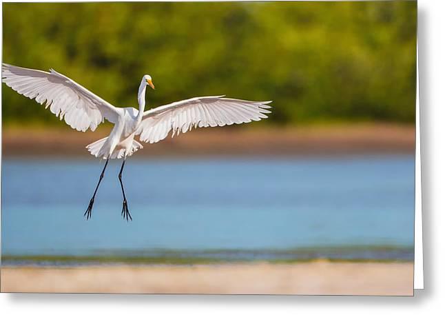 White Heron Landing Graciously Greeting Card