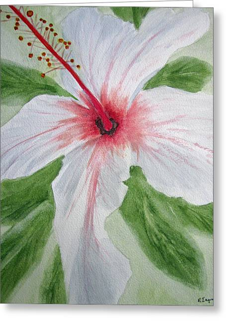 White Hibiscus Flower Greeting Card