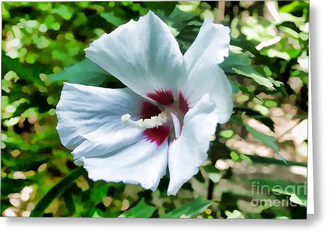 White Hibiscus From Missouri Botanical Gardens Greeting Card by Luther   Fine Art