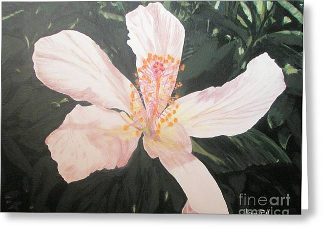 White Hibiscus In Acrylic Greeting Card