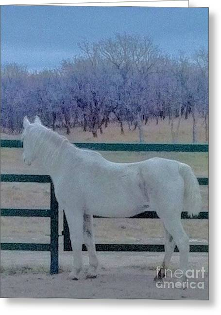 White Horse At Dusk Greeting Card by Ronnie Glover