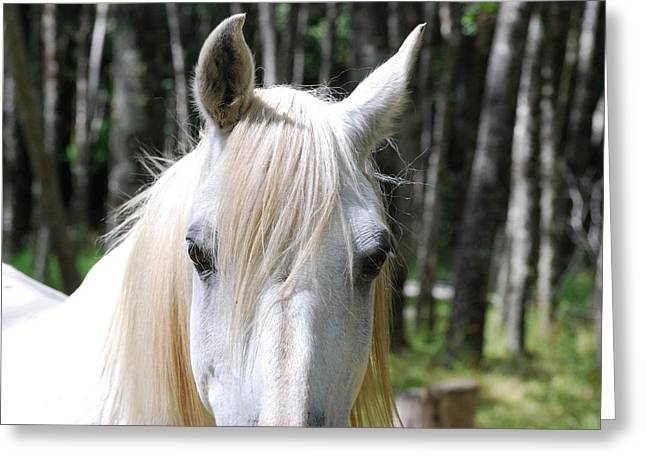 Greeting Card featuring the photograph White Horse Close Up by Jocelyn Friis