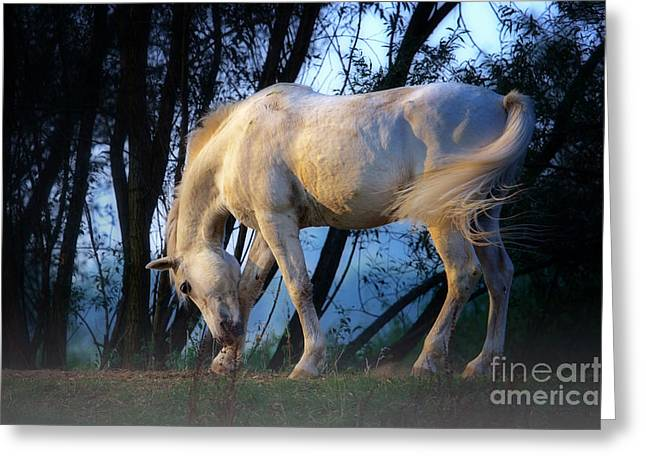 White Horse In The Early Evening Mist Greeting Card by Nick  Biemans