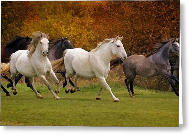 White Horse Vale Lipizzans Greeting Card